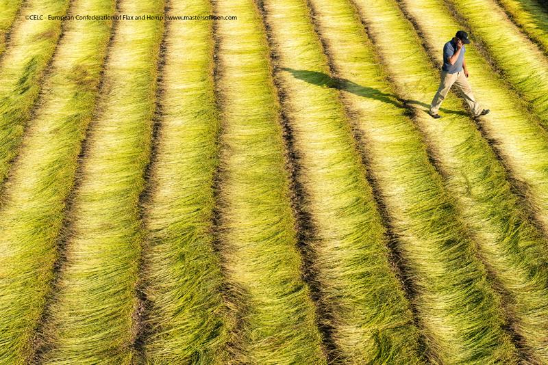 flax_RETTING_ROUISSAGE_european-flax-organic-linen